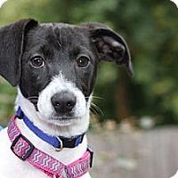 Adopt A Pet :: Gypsy - Portland, OR
