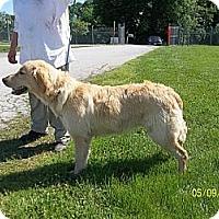 Adopt A Pet :: Suzie Wong - Denver, CO
