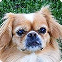 Adopt A Pet :: Luna - Fulton, NY