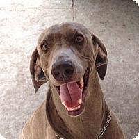 Adopt A Pet :: Jack - Sarasota, FL