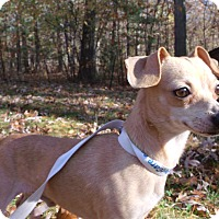 Adopt A Pet :: Turbo - Muskegon, MI