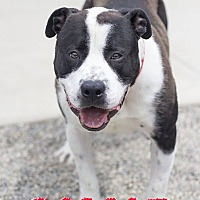 Adopt A Pet :: Roscoe - St. Clair Shores, MI