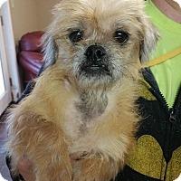 Adopt A Pet :: Jan - Lisbon, OH