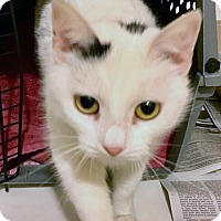 Adopt A Pet :: Rosie - Toms River, NJ