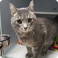 Adopt A Pet :: Bandit - Cody, WY