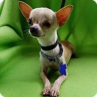 Adopt A Pet :: Fievel - Houston, TX