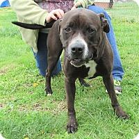 Adopt A Pet :: Duke - Reeds Spring, MO