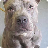 Adopt A Pet :: 17-04-1044 Lebowski - Dallas, GA