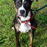 Adopt A Pet :: Zoey - Dallas, GA