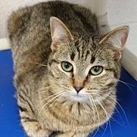 Adopt A Pet :: NORI - Lexington, NC