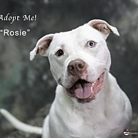 Adopt A Pet :: Rosie - Acton, CA