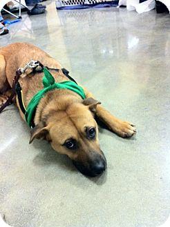 Shepherd (Unknown Type) Mix Dog for adoption in Alpharetta, Georgia - Lauren
