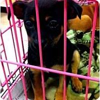 Adopt A Pet :: Trina - Fowler, CA