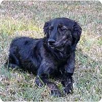Adopt A Pet :: Krista - Mocksville, NC