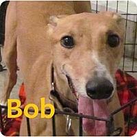 Adopt A Pet :: Bob - Fremont, OH