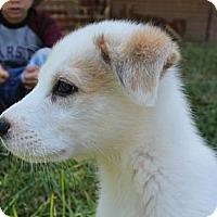 Adopt A Pet :: Nemo - Spring Valley, NY