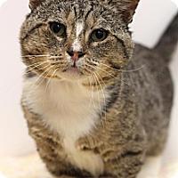 Adopt A Pet :: Willow - Sacramento, CA