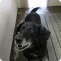 Adopt A Pet :: Spirit - Geneseo, IL