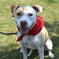 Adopt A Pet :: Sammy - Courtesy Post - Dallas, GA