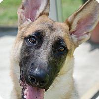 Adopt A Pet :: Katie - Ormond Beach, FL
