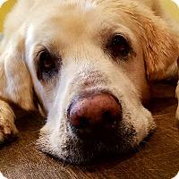 Adopt A Pet :: Cesar - Knoxville, TN