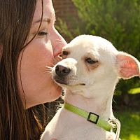 Adopt A Pet :: Tanner - Dallas, TX