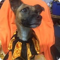 Adopt A Pet :: roxie - Henderson, KY