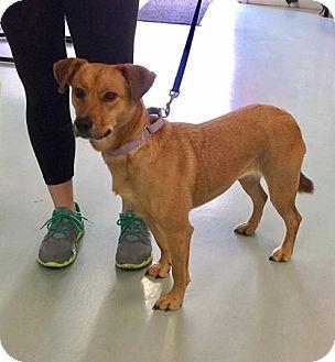 Hound (Unknown Type)/Shepherd (Unknown Type) Mix Dog for adoption in Louisiana, Missouri - Ella