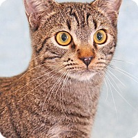 Adopt A Pet :: Bernie - Encinitas, CA