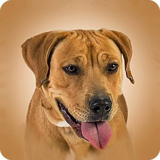 Retriever (Unknown Type) Mix Dog for adoption in Prescott, Arizona - Dorothy