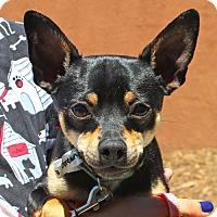 Adopt A Pet :: Green Bean - Walnut Creek, CA