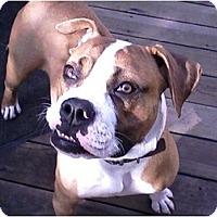 Adopt A Pet :: Teddy - Rancho Cordova, CA