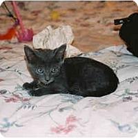 Adopt A Pet :: Johnny - Davis, CA