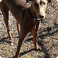 Adopt A Pet :: Lexus - New Richmond, OH