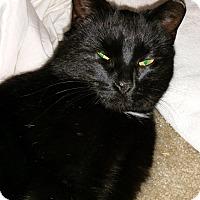 Adopt A Pet :: Kira - N. Billerica, MA