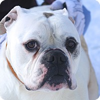 Adopt A Pet :: Gucci - Hudson, NH