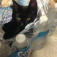 Adopt A Pet :: Sheridan - St. Cloud, FL