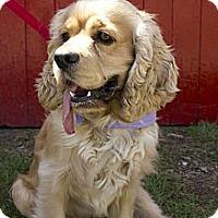 Adopt A Pet :: Jetson - Rigaud, QC