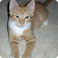 Adopt A Pet :: Niall - Richmond, VA