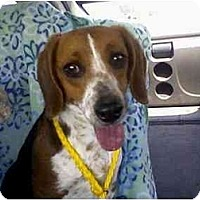 Adopt A Pet :: Cagney - Indianapolis, IN