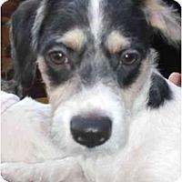 Adopt A Pet :: Franky - Los Angeles, CA