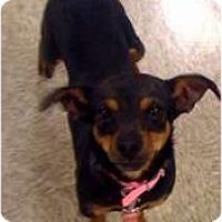 Adopt A Pet :: Minnie - Fowler, CA