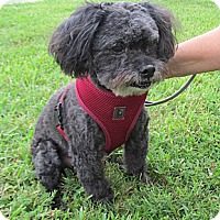 Adopt A Pet :: Onyx - Kingwood, TX
