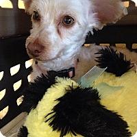 Adopt A Pet :: Hazel-WATCH MY VIDEO!!!! - Irvine, CA