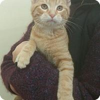 Adopt A Pet :: Skywalker - Troy, OH