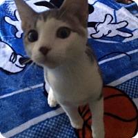 Adopt A Pet :: Piper - Monroe, NC