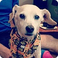 Adopt A Pet :: Tony - Lawrenceville, GA