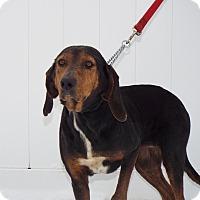 Adopt A Pet :: Elanor - Shelby, MI
