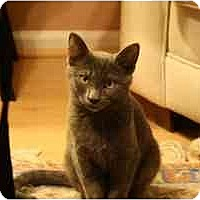 Adopt A Pet :: Marvin (&Louie) - Arlington, VA