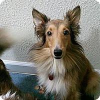 Adopt A Pet :: Skyler - North Vernon, IN